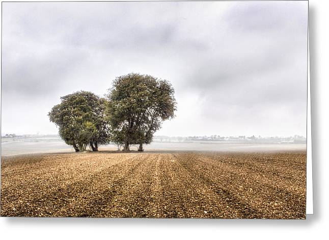 Harvest Art Greeting Cards - Lone Trees Greeting Card by Ian Hufton