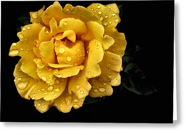 Lone Yellow Rose Greeting Card by Stephanie Hollingsworth