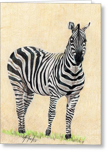 Camouflage Drawings Greeting Cards - Lone Zebra Greeting Card by Audrey Van Tassell