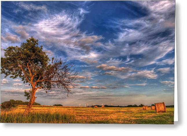 Tonemapping Greeting Cards - Loneley Tree Greeting Card by Steffen Gierok