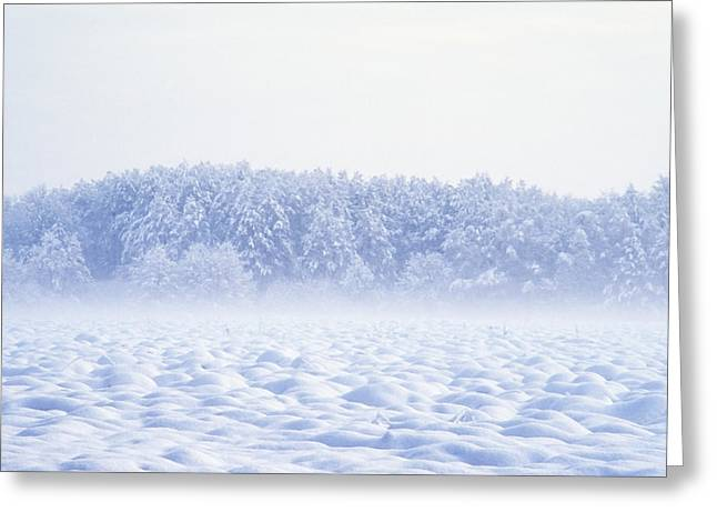 Loneliness In Winter Greeting Card by Patrick Kessler