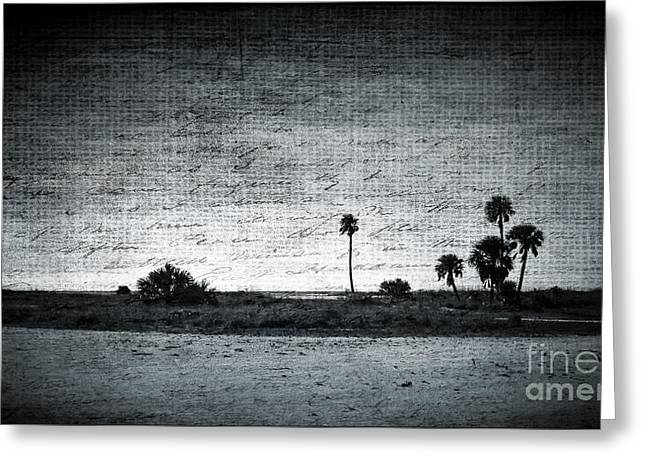 California Beach Art Greeting Cards - Lonely Beach Palms Greeting Card by Perry Webster