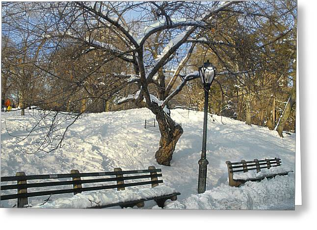 Gnarly Greeting Cards - Lonely Benches in Central Park Greeting Card by Muriel Levison Goodwin
