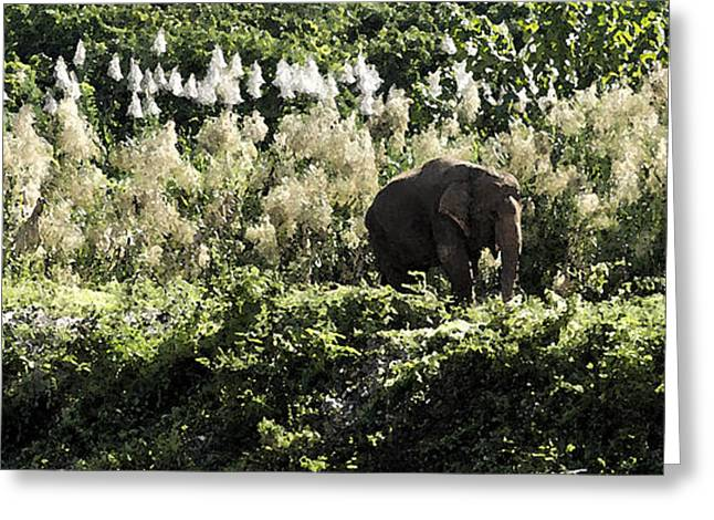 Elephant Greeting Cards - Lonely Bull Greeting Card by Steve Smith