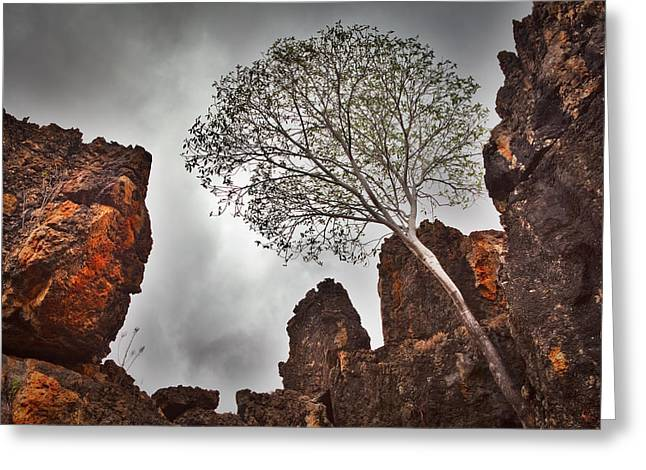 Harsh Conditions Greeting Cards - Lonely Gum Tree Greeting Card by Dirk Ercken