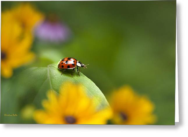 Beetle Greeting Cards - Lonely Ladybug Greeting Card by Christina Rollo