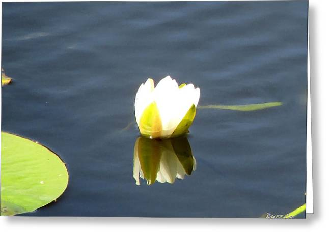 Oil Like Digital Greeting Cards - Lonely Lotus Greeting Card by Buzz  Coe