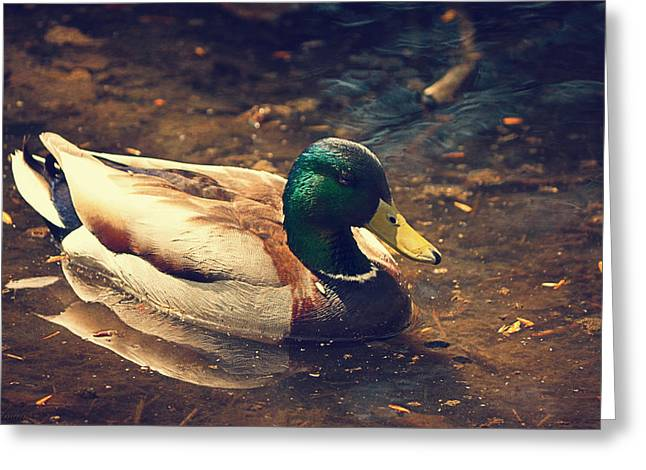 Water Fowl Digital Greeting Cards - Lonely Mallard  Greeting Card by Maria Angelica Maira