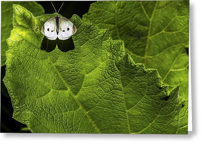 Lonely On A Leaf Greeting Card by Tim Buisman