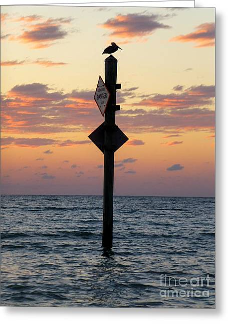 Pelicans Over Ocean Greeting Cards - Lonely Pelican in the Sunset Greeting Card by Nicole Beland