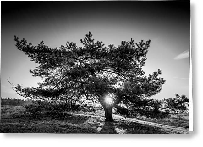 Alejandro Greeting Cards - Lonely Pine Greeting Card by Alejandro Quezada
