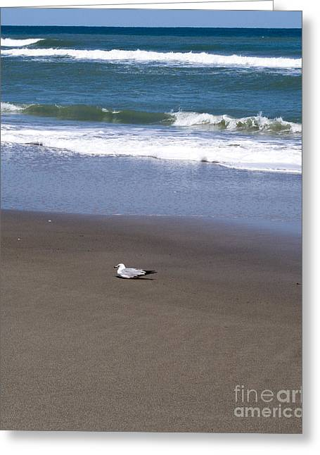 Lone Gull Greeting Cards - Lonely Sea Gull Greeting Card by Allan  Hughes