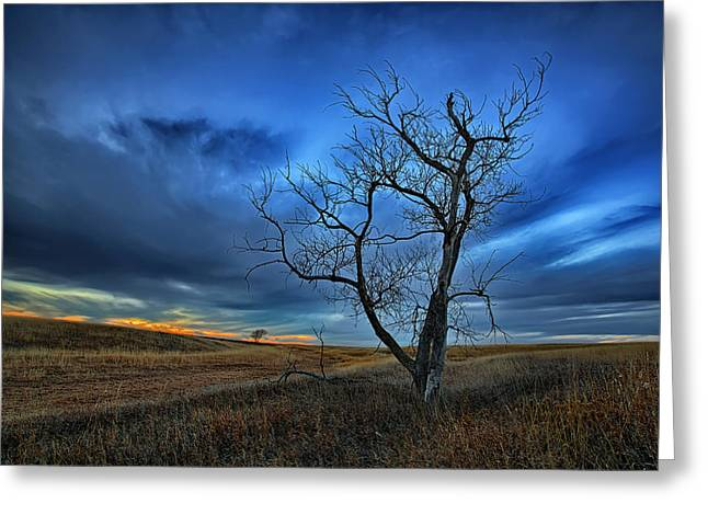 Switch Greeting Cards - Lonely Sentinel Greeting Card by Thomas Zimmerman
