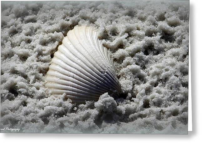 Panama City Beach Greeting Cards - Lonely Shell Greeting Card by Debra Forand