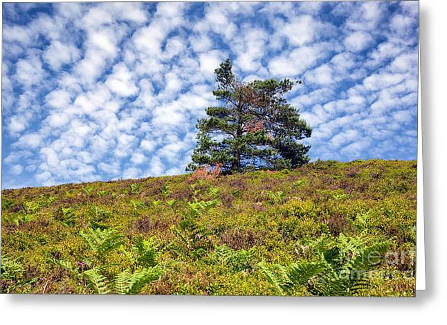 Lonely Tree Greeting Card by Adrian Evans
