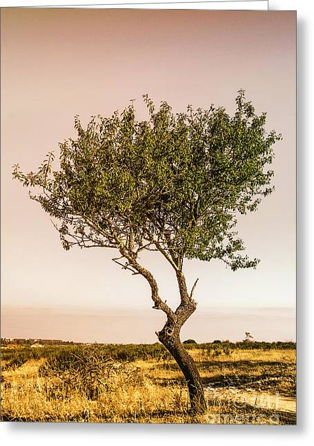 Small Trees Greeting Cards - Lonely Tree Greeting Card by Carlos Caetano