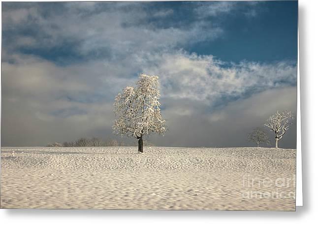 Caroline Pirskanen Greeting Cards - Lonely Tree Greeting Card by Caroline Pirskanen