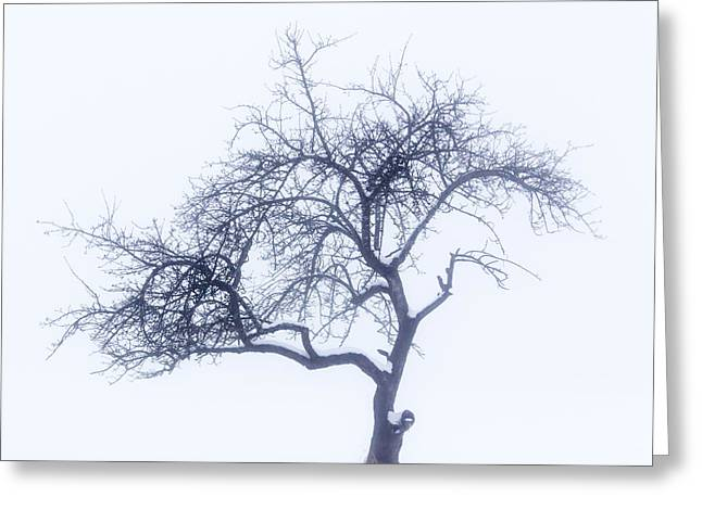 Snowstorm Greeting Cards - Lonely tree in the fog Greeting Card by Aldona Pivoriene