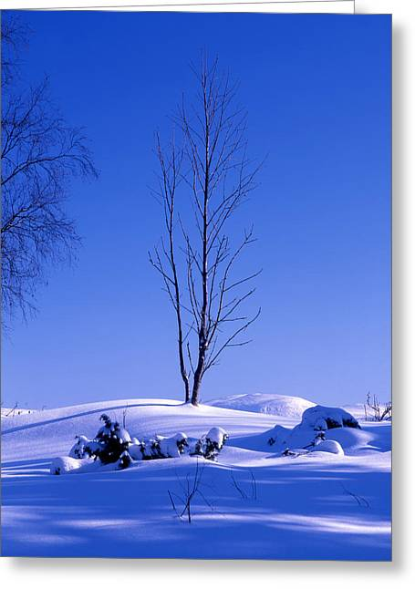 Snowy Day Greeting Cards - Lonely tree in winter Greeting Card by IB Photo