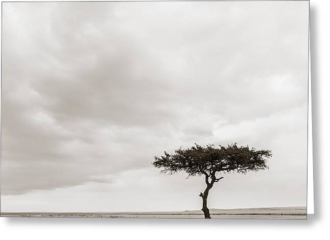 Tiere Greeting Cards - Lonely Tree Masai Mara Kenya Greeting Card by Regina Mueller