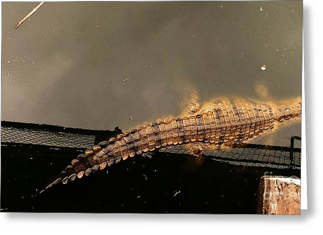 Stellenbosch Greeting Cards - Lonesome Crocodile Greeting Card by Lisa Byrne
