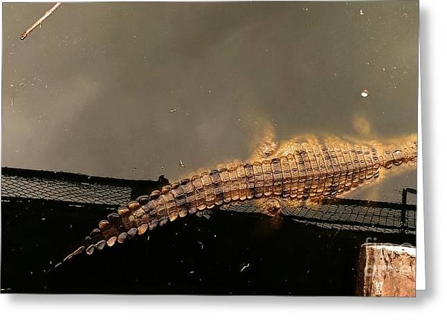 Stellenbosch Photographs Greeting Cards - Lonesome Crocodile Greeting Card by Lisa Byrne
