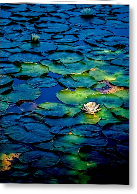 Aquatic Greeting Cards - Lonesome Lily Greeting Card by Jim DeLillo