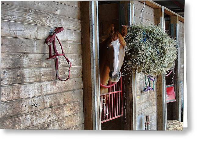 Race Horse Greeting Cards - Lonesome Greeting Card by Ron Roberts