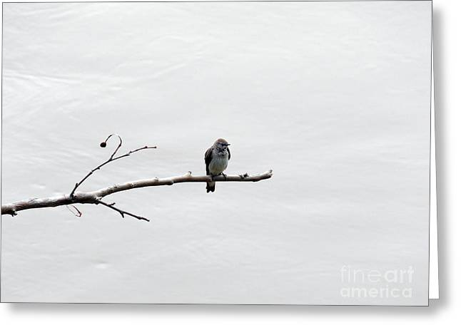 Photos Of Birds Greeting Cards - Lonesome Greeting Card by Skip Willits