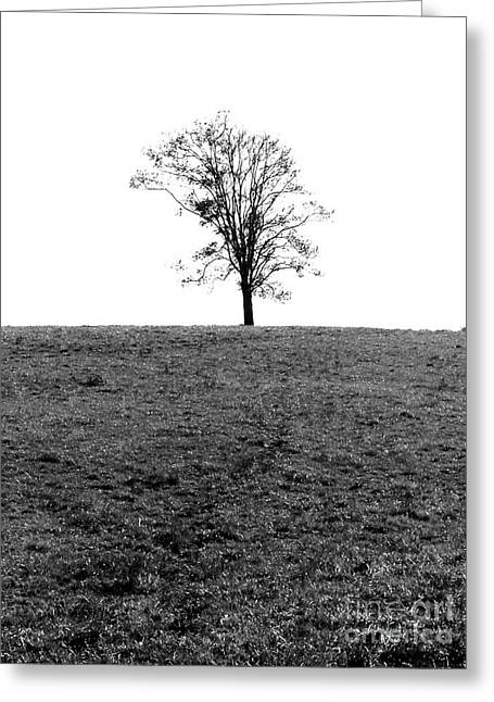 Book Cover Art Greeting Cards - Lonesome Tree Greeting Card by Jt PhotoDesign
