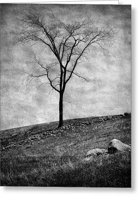 Outlook Bleak Greeting Cards - Lonesome Tree Greeting Card by Mary Lane