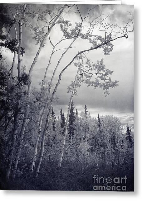 Aspen Grove Greeting Cards - Lonesome Woods Greeting Card by Priska Wettstein