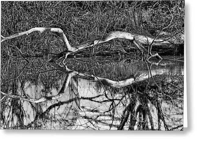 Trees Reflecting In Creek Greeting Cards - Long arms BW Greeting Card by Leif Sohlman