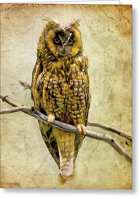 Americana Pictures Greeting Cards - Long Eared Owl Greeting Card by Ray Downing