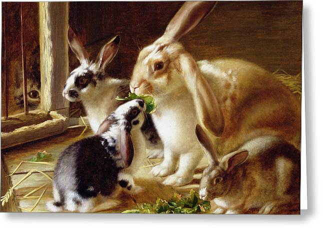 Innocence Greeting Cards - Long-eared rabbits in a cage watched by a cat Greeting Card by Horatio Henry Couldery