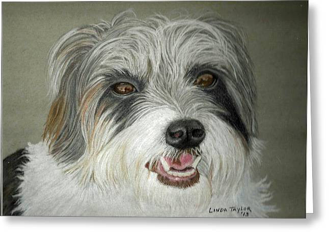 Dog Prints Pastels Greeting Cards - Long Hair Jack Russell Terrier Portrait Greeting Card by Linda Taylor