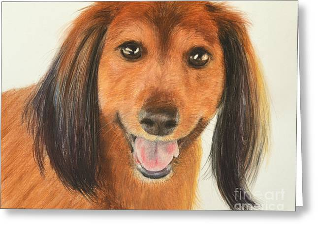 Guard Dog Pastels Greeting Cards - Long Haired Dachshund Greeting Card by Kate Sumners