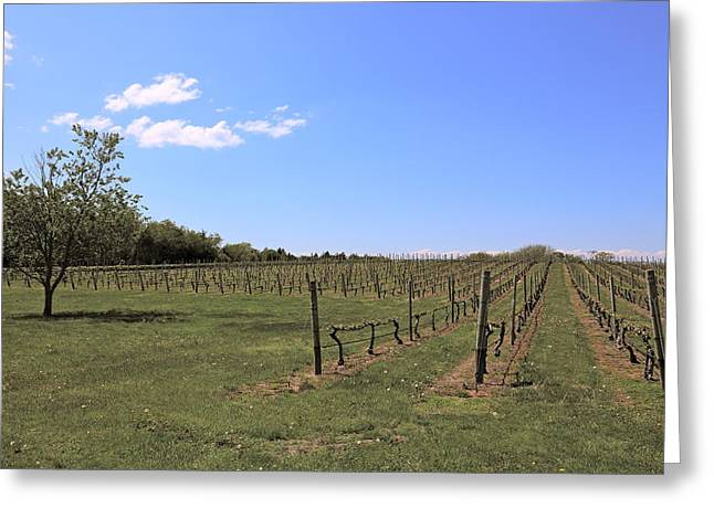 Vineyards Greeting Cards - Long Island vineyard 2 Greeting Card by Frank Freni