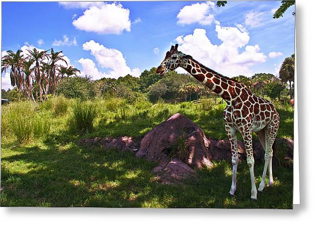 Wdw Greeting Cards - Long Neck Greeting Card by Ryan Crane