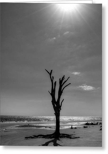 Hopelessness Greeting Cards - Long Shadow on Jekyll Island in Black and White Greeting Card by Chrystal Mimbs