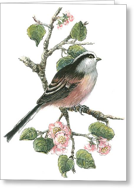 Cherry Blossoms Paintings Greeting Cards - Long Tailed Tit and Cherry Blossom Greeting Card by Nell Hill