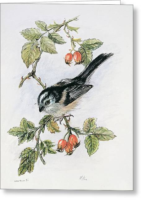 Queue Greeting Cards - Long Tailed Tit and Rosehips Greeting Card by Nell Hill