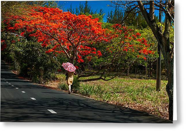 Rainbow Umbrella Greeting Cards - Long Way along the Road. Mauritius Greeting Card by Jenny Rainbow