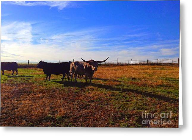 Pen Greeting Cards - Longhorn Bull and Cows Greeting Card by Marty Kugler