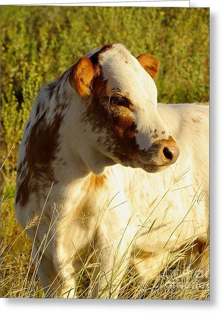 Yearling Greeting Cards - Longhorn Calf Greeting Card by Robert Frederick