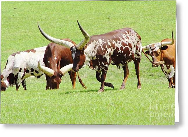 Cloven Hoof Pets Greeting Cards - Longhorn Cattle Greeting Card by D Hackett