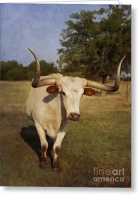 Steer Greeting Cards - Longhorn Greeting Card by Elena Nosyreva