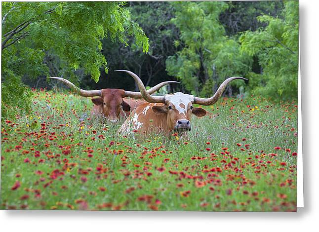 Texas Wild Flowers Greeting Cards - Longhorns in a Field of Texas Wildflowers 1 Greeting Card by Rob Greebon