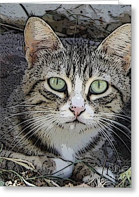Pictures Of Cats Greeting Cards - Longing Greeting Card by Anita Dale Livaditis