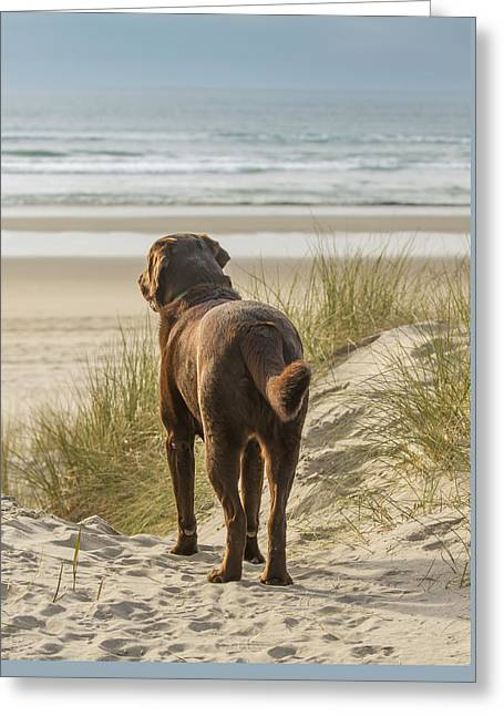 Chocolate Lab Greeting Cards - Longing Greeting Card by Jean Noren